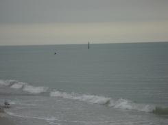 Un dauphin qui daigne approcher de la plage en notre présence ! Merci !